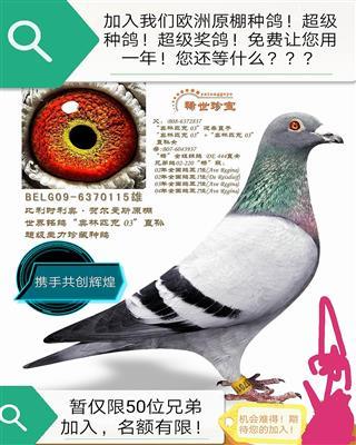 欢迎全国广大鸽友加入湖南亚通鸽业