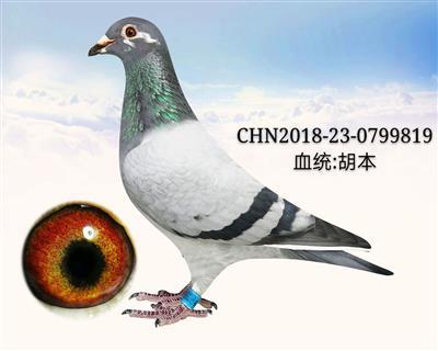 胡本819