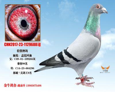 CHN2017-23-1129688雄