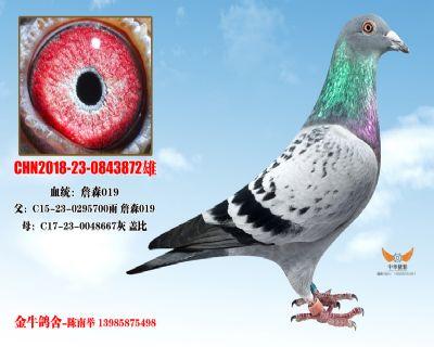 CHN2018-23-0843872雄
