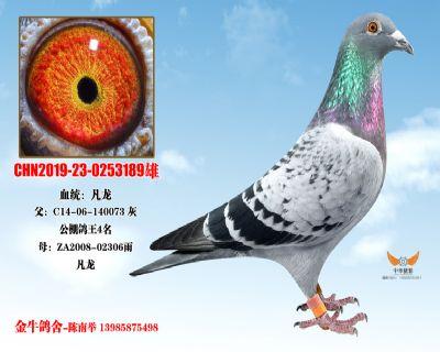 CHN2019-23-0253189雄