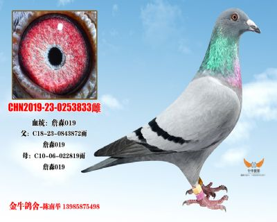 CHN2019-23-0253833雌