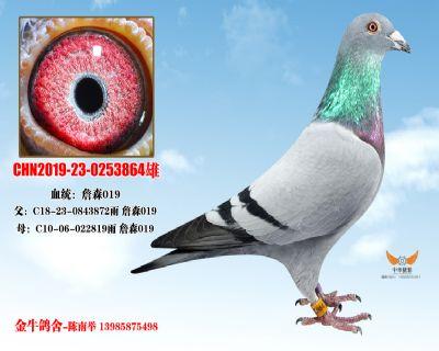 CHN2019-23-0253864雄