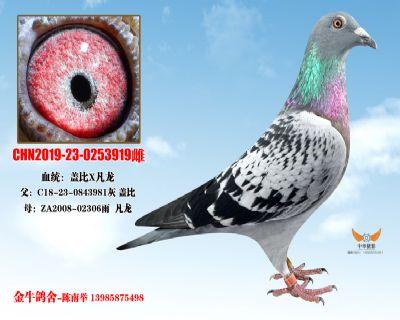 CHN2019-23-0253919雌