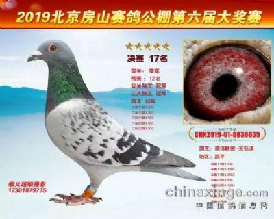 北京房山皓月公棚鸽王总冠军