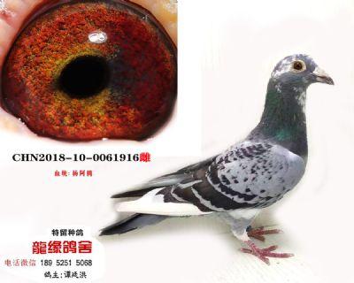 杨阿腾03