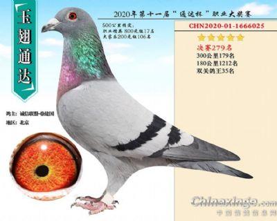 北京玉翅通达决赛279名