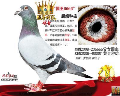 贺伯特-国王6666《冠军血系》