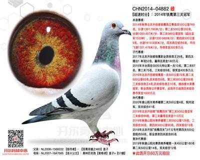 【超速时分】铁鹰第三关冠军,综合鸽王6名