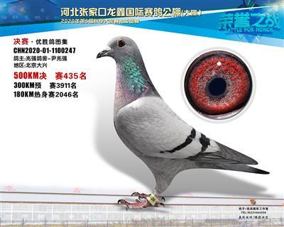 龙鑫435