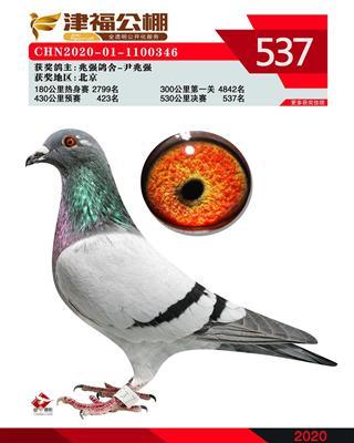 津福537