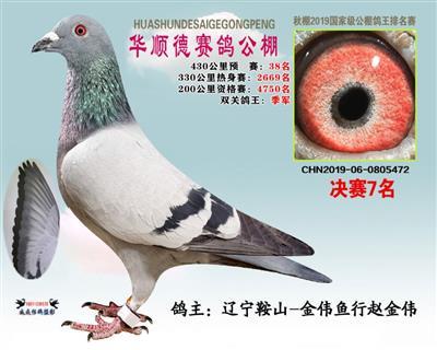 北京华顺德公棚双关鸽王季军