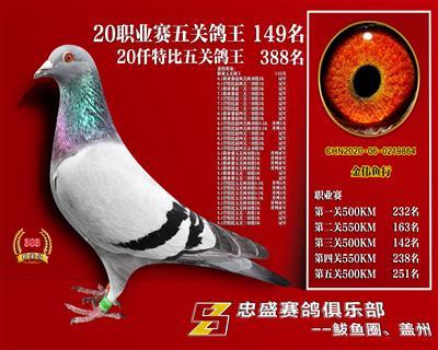 辽宁盖州忠盛俱乐部五关综合鸽王149名