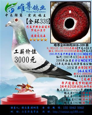 【金环339】【天行者】直子