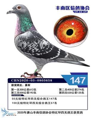 2020年赛季鸽
