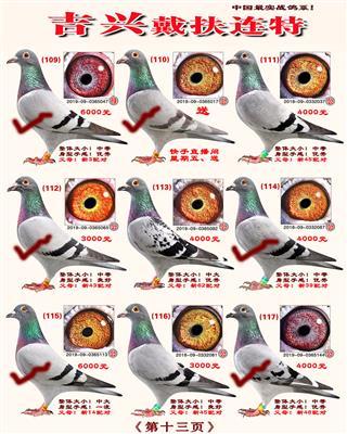 2020年一口价小种鸽已上传