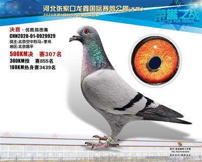 龙鑫929