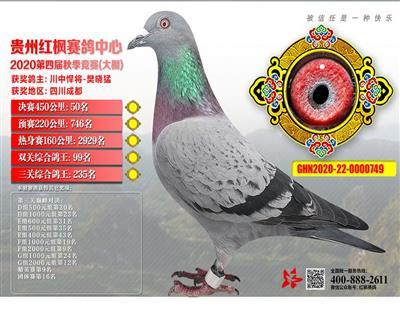 贵州红枫获奖鸽决赛50名