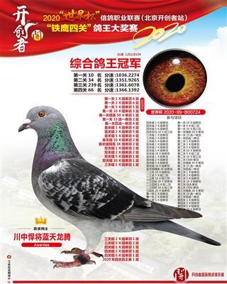 2020北京开创者铁鹰4关大奖赛鸽王冠军