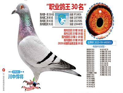 北京长阳国际赛鸽俱乐部职业鸽王30名