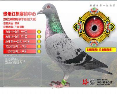郭氏天马61