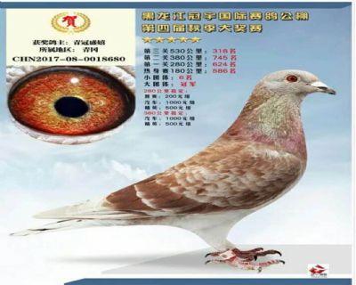 黑龙江冠宇国际赛鸽公棚决赛318名大团体冠军之一