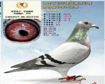 黑龙江冠宇国际赛鸽公棚决赛528名大团体冠军之一