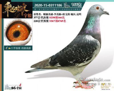 云南宇松决赛166名