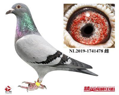 NL2019-1741478