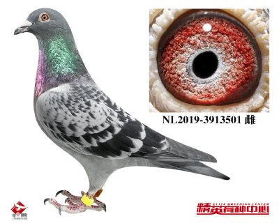 NL2019-3913501