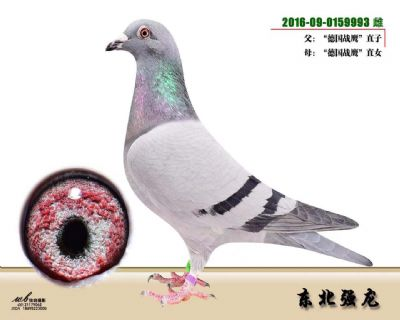 微信图片_202012171707346