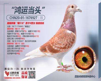 中信网2021元旦抽奖奖品鸽-1