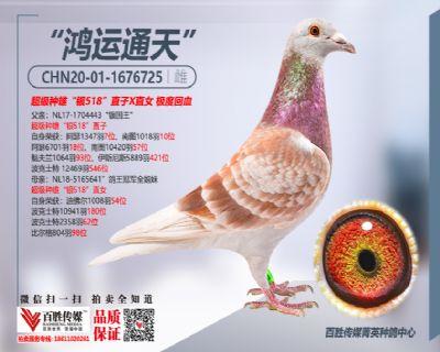 中信网2021元旦抽奖奖品鸽-2
