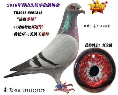 三关鸽王亚军