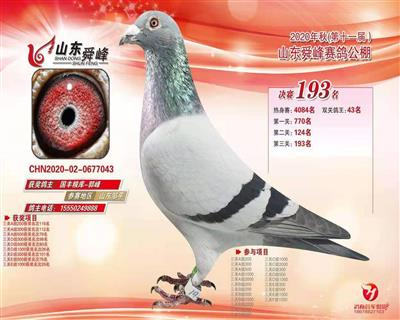 2020年秋山东舜峰赛鸽公棚决赛193名