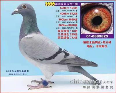 涿州爱亚卡普154名