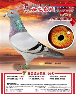 2020陈龙杯第五关冠军