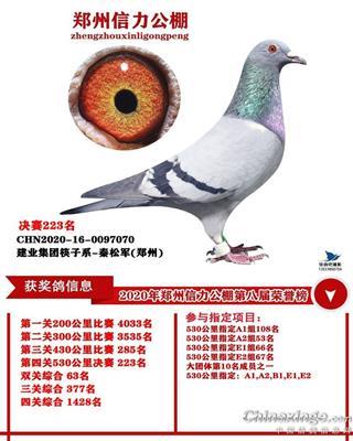 郑州信力公棚决赛223名