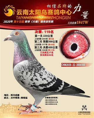 20年云南楚雄太阳鸟三关综合鸽王17名