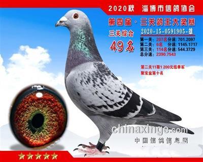三关鸽王49