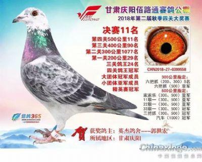 鸽王冠军558