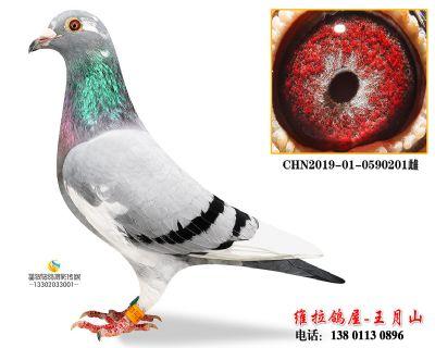 CHN2019-01-0590201雌