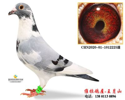 CHN2020-01-1012225雌