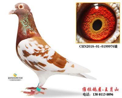 CHN2018-01-0199976雄