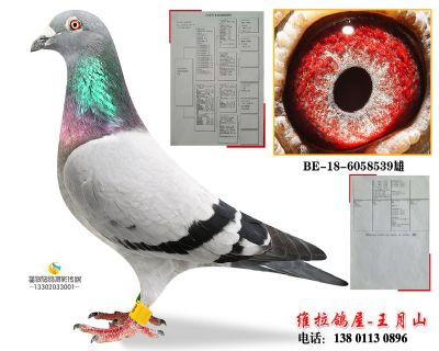 BE-18-6058539雄