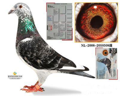 NL-2008-2050508雌