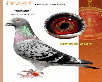"""""""千公里冠军直子""""维姆穆勒原舍"""