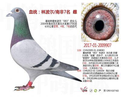 林波��9907