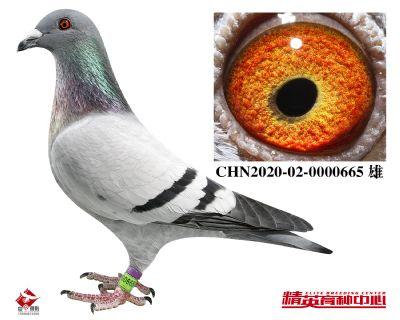 CHN2020-02-0000665