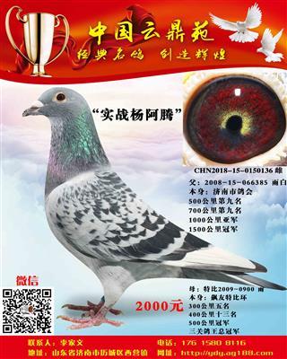 实战杨阿腾 136
